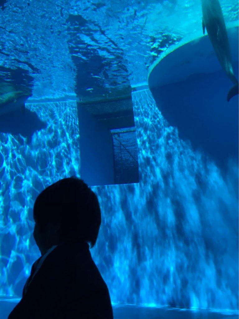 イルカの水槽