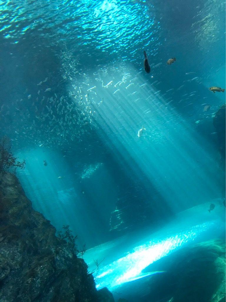 大小様々な魚が泳ぐ大きな水槽
